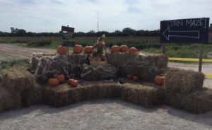 2015 HAY BALE PICTURE AREA