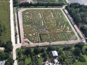 ems-2016-corn-maze-photo-3